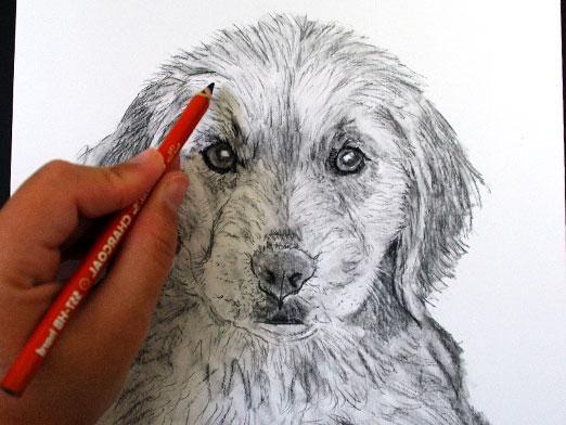 Как научиться рисовать собак?