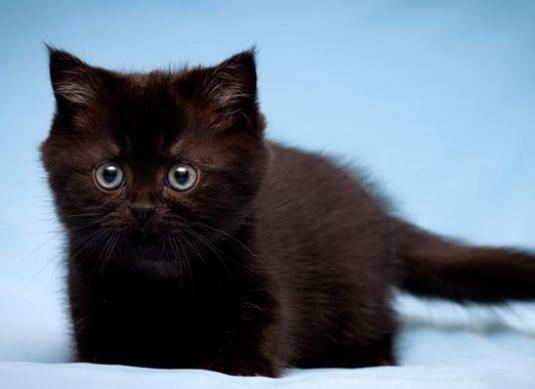 Как назвать черного котенка-мальчика?