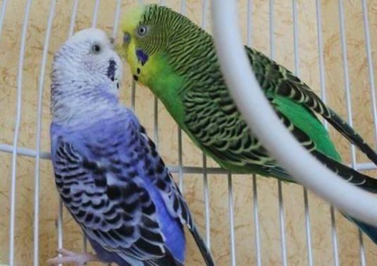 Как назвать птицу?