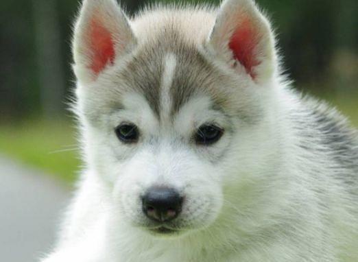 Как назвать щенка?