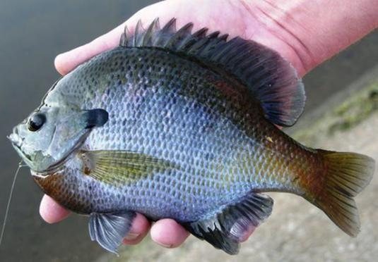 Как называется рыба?