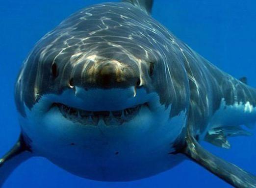 Как называются акулы?