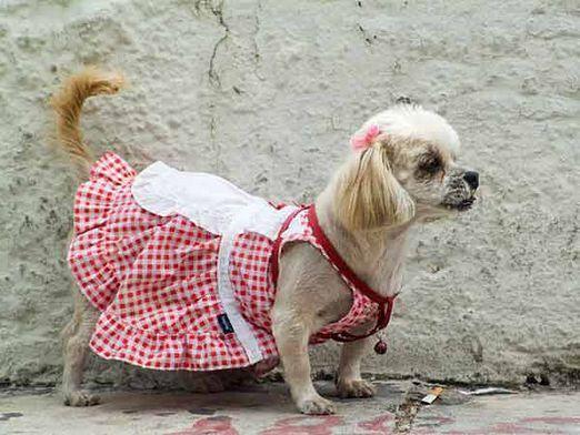 Как одеть собаку?