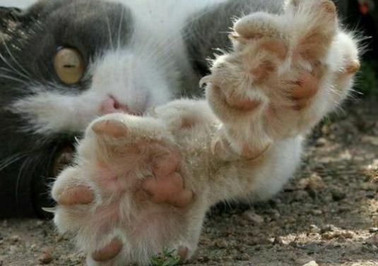 Как отучить котенка царапаться?