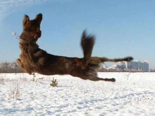 Как отучить собаку прыгать?