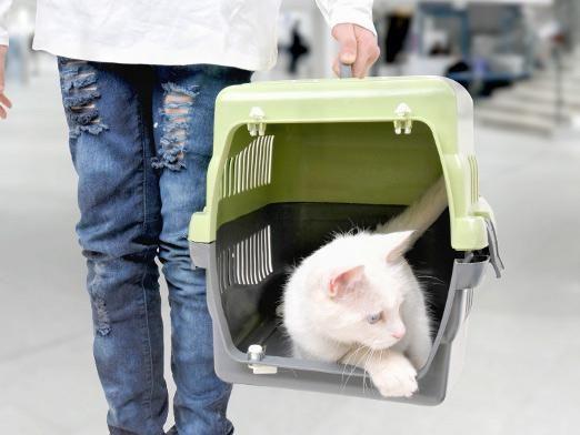 Как перевезти кошку?