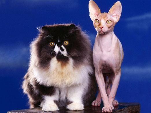 Как подстричь кошку?