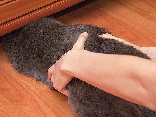 Как поймать кота?