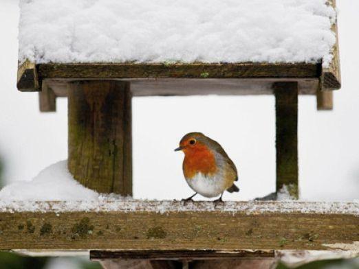 Як допомогти птахам узимку?