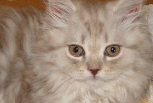 Как прикольно назвать кота?