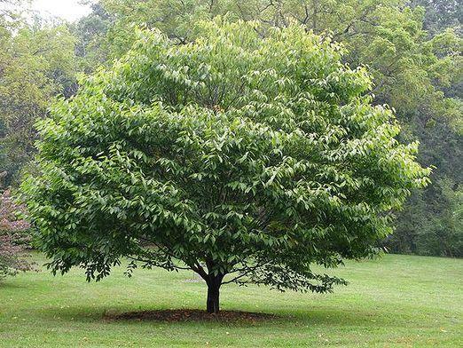 Как растут деревья?