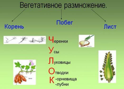 Как размножаются цветы?