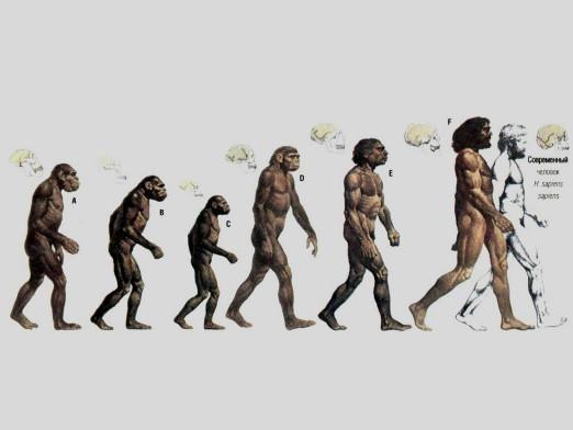 Как развивался человек?