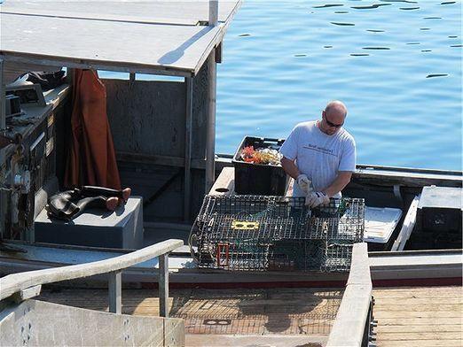 Как сделать ловушку для рыбы?