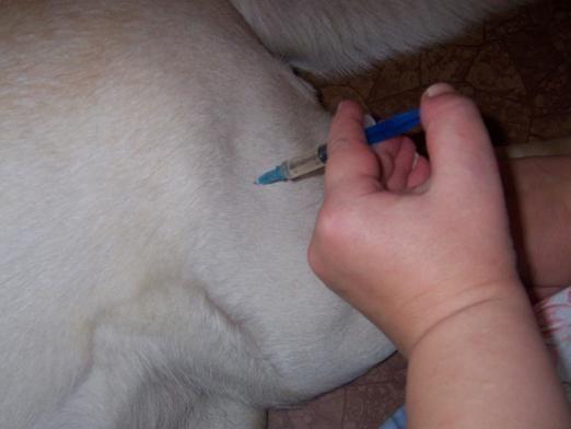 Как сделать укол собаке?
