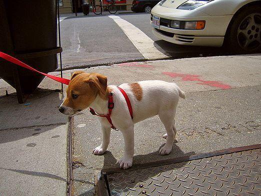 Как щенка приучить к улице?