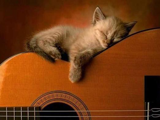 Как спят кошки?