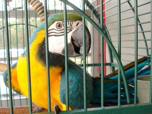 Как ухаживать за попугаем?