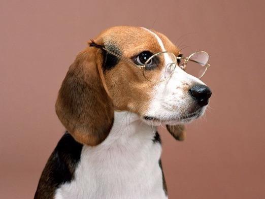 Как видят собаки?