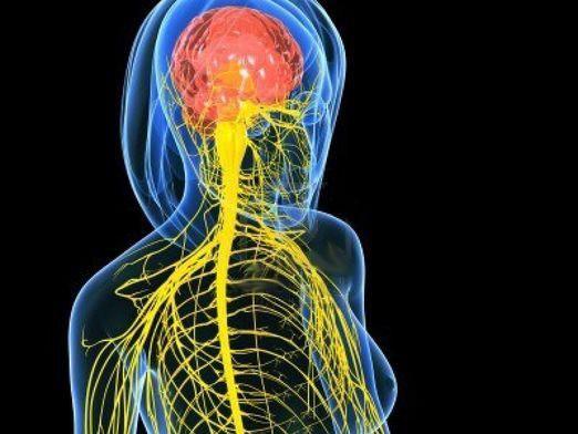 Как выглядит нерв?