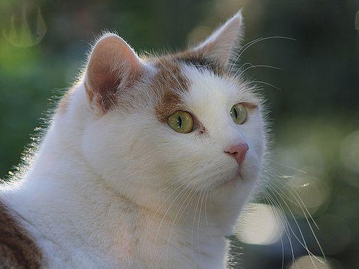 Как вылечить кота?