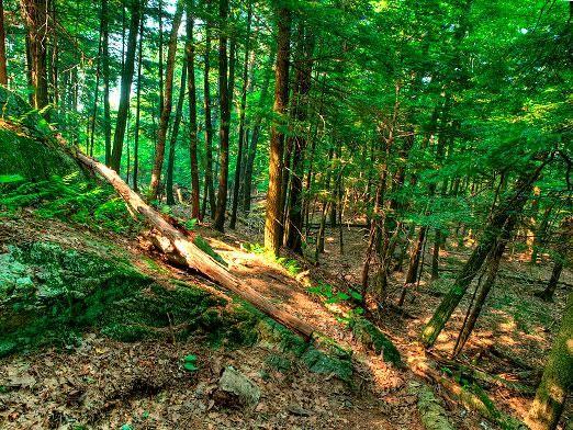 Как выжить в лесу?