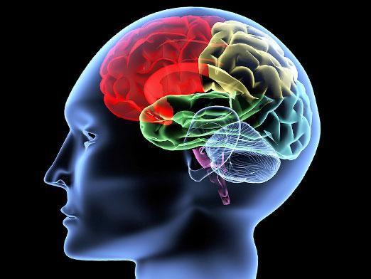 Як змусити мозок працювати?