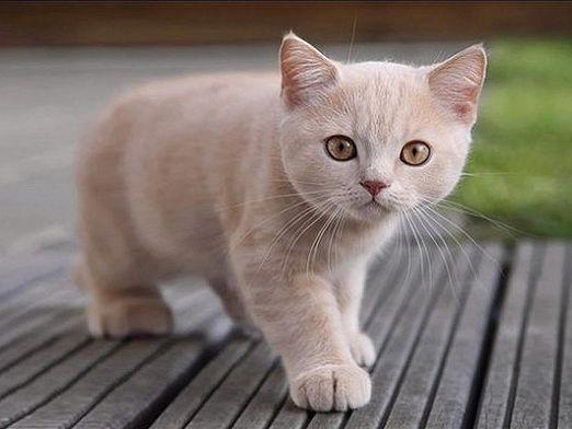Как живут кошки?