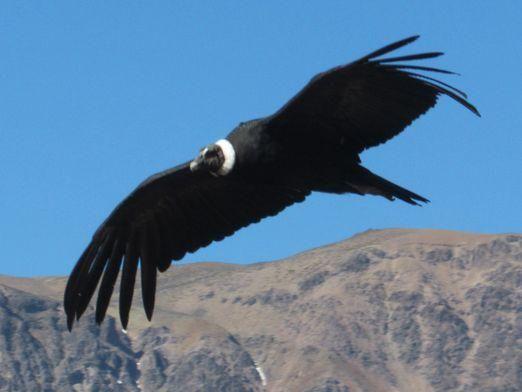 Какая птица самая большая?