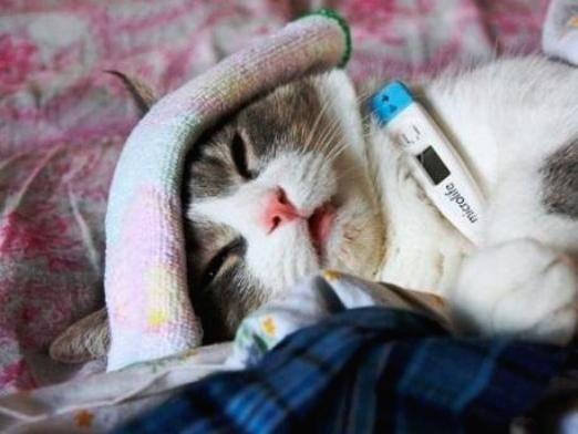 Какая температура у кошек?