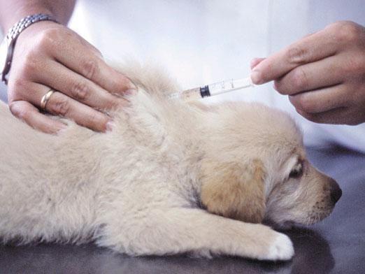 Какие прививки делают щенкам?