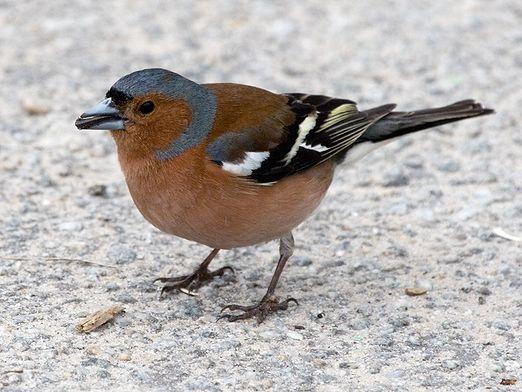 Какие птицы перелетные?