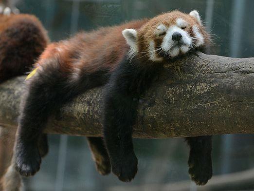 Какие животные впадают в спячку?