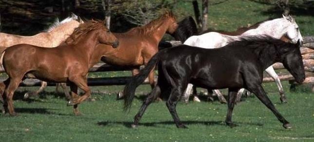 Какими бывают масти лошадей