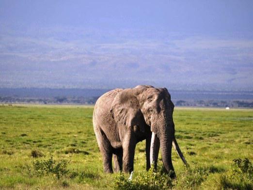 Какое млекопитающее живет дольше всех?