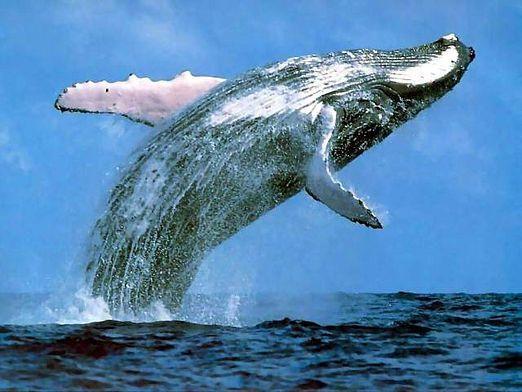Какое животное самое большое?