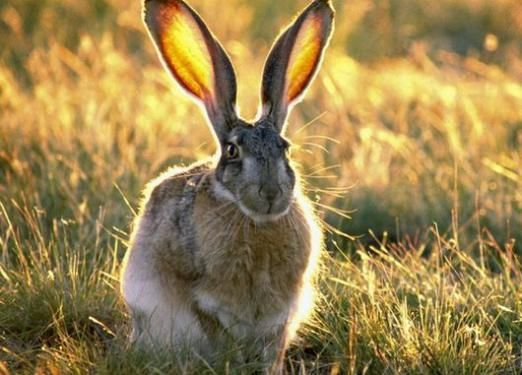 Какой он: заяц?
