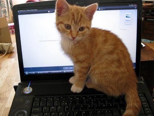 Какой зверь любит компьютер больше всего