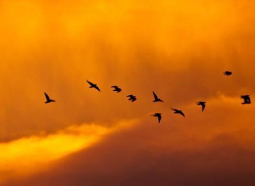 Коли відлітають птахи?