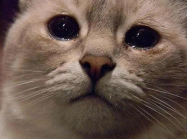 кіт плаче