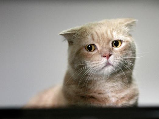 Куда отдать кошку?