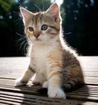 мільбемакс для кошенят і молодих кішок