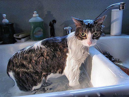 Моют ли кошек?