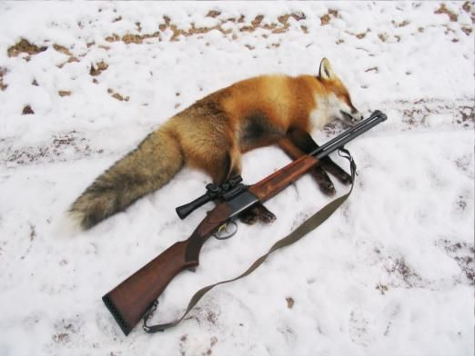 На кого можно охотиться?