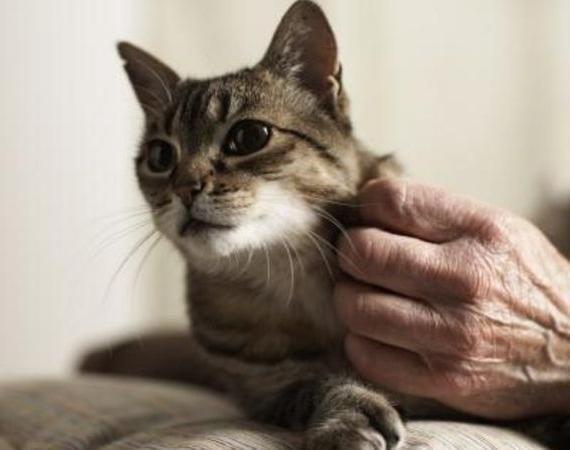 Яка температура у кішок