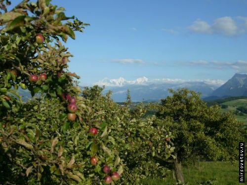 Особенности жизни в швейцарии