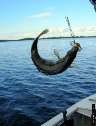 Отдых и рыбалка на волге и ахтубе