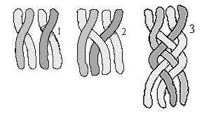 Коса з чотирьох пасм схема