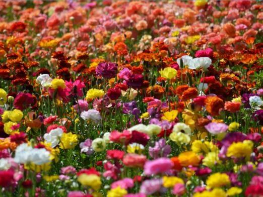 Почему цветы разных цветов?