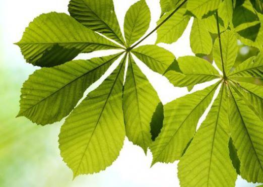 Почему листья зеленые?